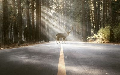 State Contest for Ideas to Reduce Colorado Roadkill